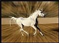 Picture Title - Arabian Wind !!!