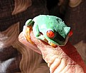 Picture Title - wee tree frog