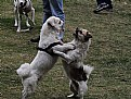 Picture Title - dog beat dog