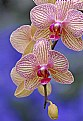 Picture Title - Just Orchids