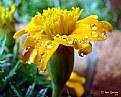Picture Title - Raindrops