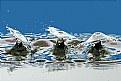 Picture Title - Triple Double Splash