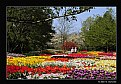 Picture Title - Spring at Longwood (d2196)