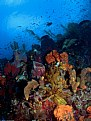 Picture Title - Reef garden