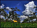 Picture Title - Spring orchard...