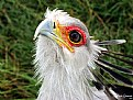 Picture Title - Secretary Bird