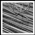 Picture Title - Whisk