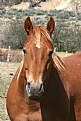 Picture Title - Colorado Horsey