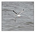 Picture Title - Seagull and the fish