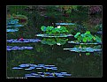 Picture Title - Water Lilies