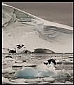 Picture Title - Enterprise Island - Cormorants