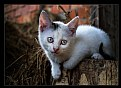 Picture Title - Kitten