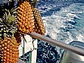 Picture Title - Polynesian Pineapples