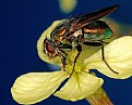 Picture Title - Blowfly beauty