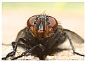 Picture Title - The Fly