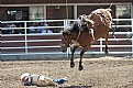 Picture Title - Bucked-Off