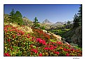 Picture Title - Garden among the mountains