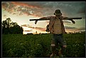 Picture Title - ..scarecrow..