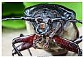 Picture Title - Alien