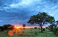 Picture Title - Serengeti Sunrise