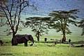 Picture Title - Tanzania