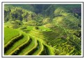 Picture Title - Rice Terraces