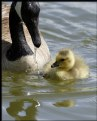 Picture Title - Swimming Lessons