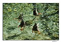 Picture Title - Synchronized Swimming
