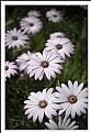 Picture Title - Flor