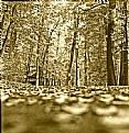 Picture Title - Autumn