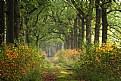 Picture Title - Autumn starts