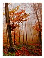 Picture Title - Colors in the autumn forest