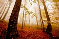 Picture Title - Autumn Forest