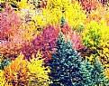 Picture Title - Autum Colors