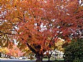Picture Title - colorful tree