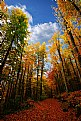 Picture Title - Forest
