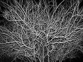 Picture Title - Tangle