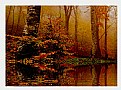 Picture Title - Forest Autumn