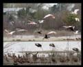 Picture Title - Birds In flight