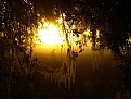 Picture Title - A Spanish Moss Sunrise