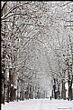 Picture Title - snow