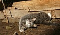 Picture Title - cat yoga