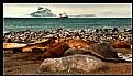 Picture Title - Antarctic Life