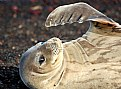Picture Title - Seal Scratch