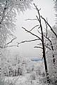 Picture Title - SnowyDream