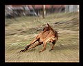 Picture Title - The running dog:)