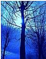 Picture Title - winter blues...
