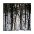 Picture Title - Winter forest