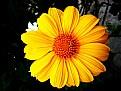 Picture Title - SUN