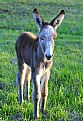 Picture Title - Baby Donkey